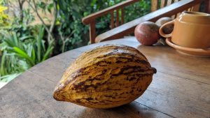 kakao pokarm bogów